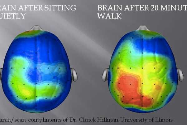 Physical Activity and the Brain